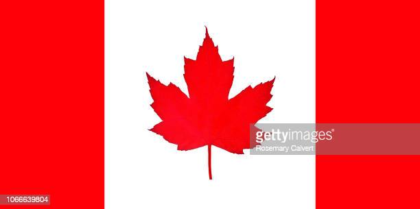 canadian flag imitated with use of natural leaf. - canadian flag stock pictures, royalty-free photos & images