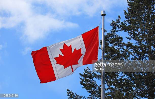 canadian flag on flag pole against blue sky and tree - canadian rockies stockfoto's en -beelden