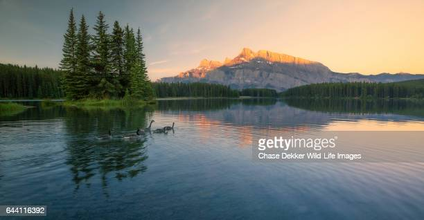 canadian geese in banff - canadian rockies stock pictures, royalty-free photos & images
