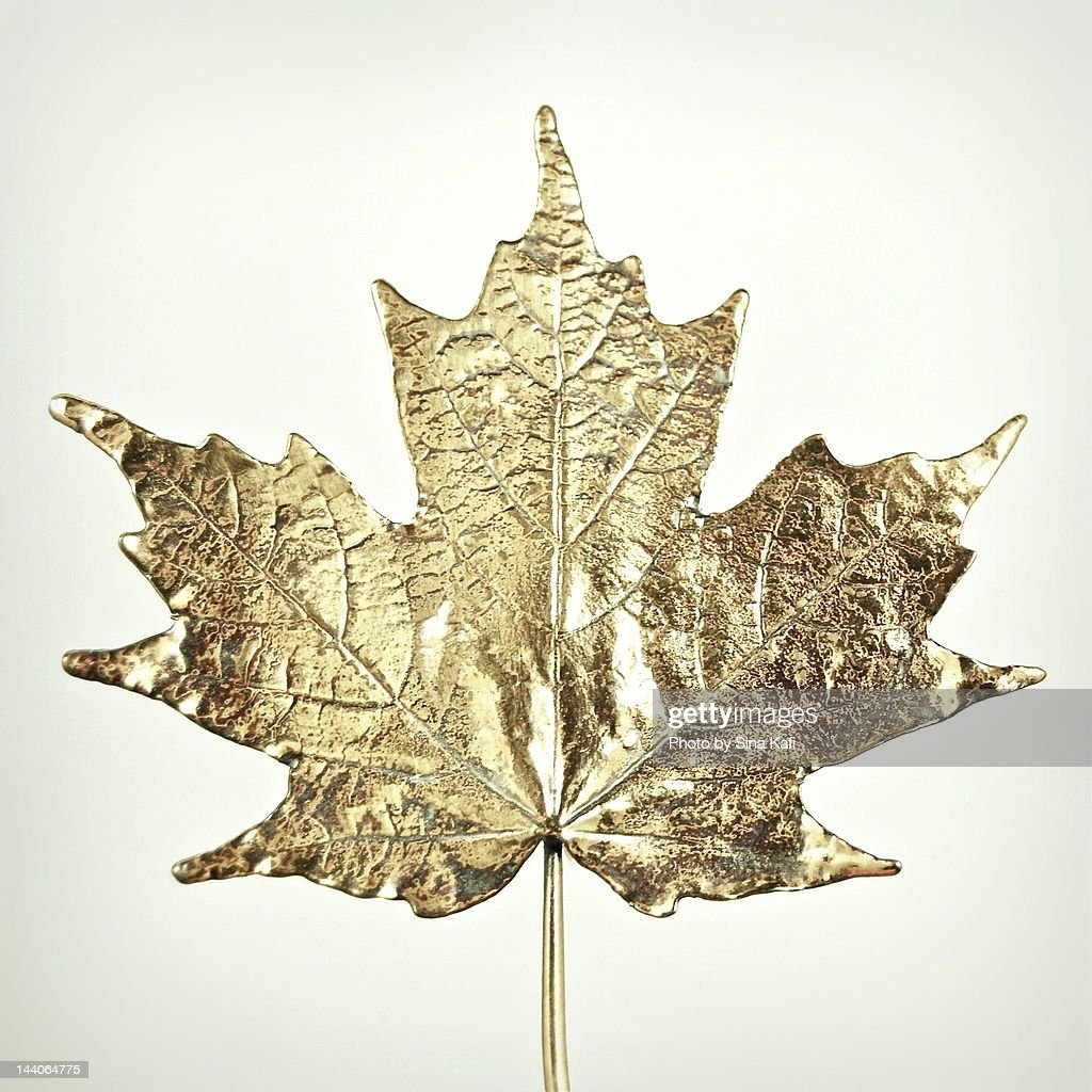 Canadian gold maple leaf : Stock Photo