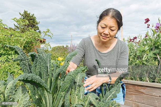 Canadian Woman Tends Kale Garden in Urban Farm Downtown Vancouver