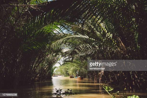 canal amidst trees at forest - bortes fotografías e imágenes de stock