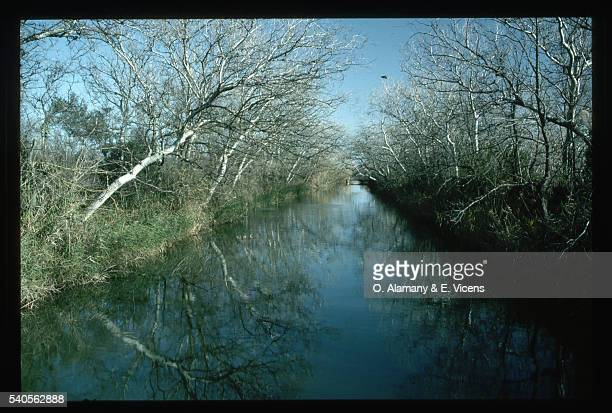 canal and countryside - alamany fotografías e imágenes de stock