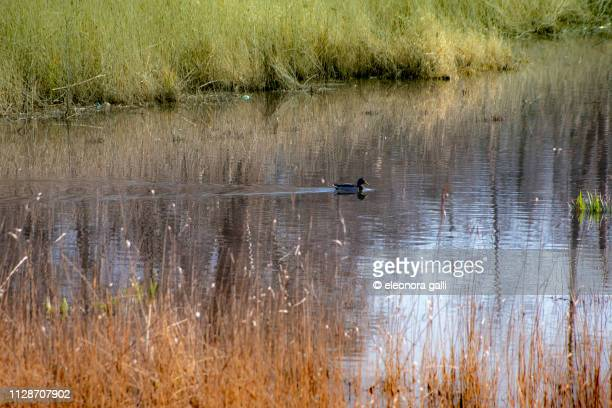 canale d'acqua - luogo d'interesse stock pictures, royalty-free photos & images