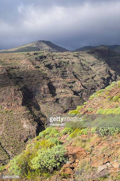Canary Islands, La Gomera, Alajero, Barranco Charco Hondo
