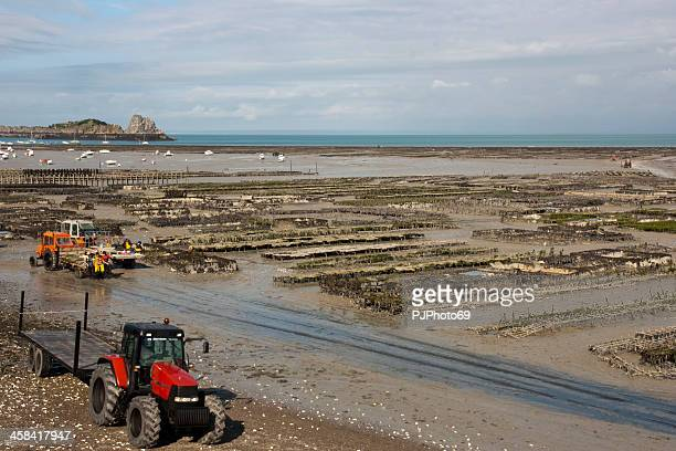 Cancale - Oysters and mussels farm's