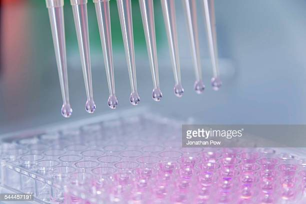 Cancer research laboratory, cells being dispensed using electronic pipette