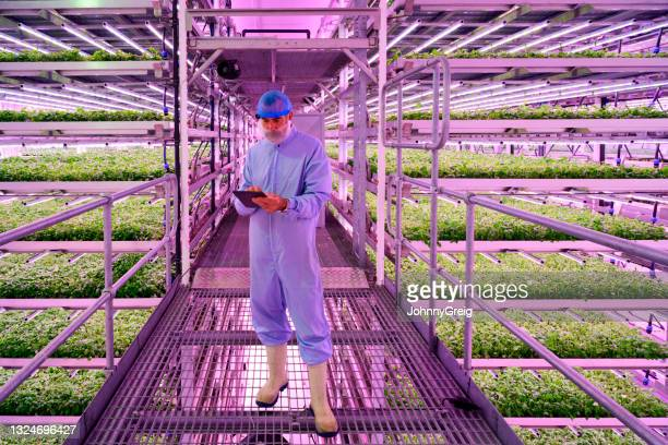 candid portrait of technician in hydroponics growing chamber - working seniors stock pictures, royalty-free photos & images