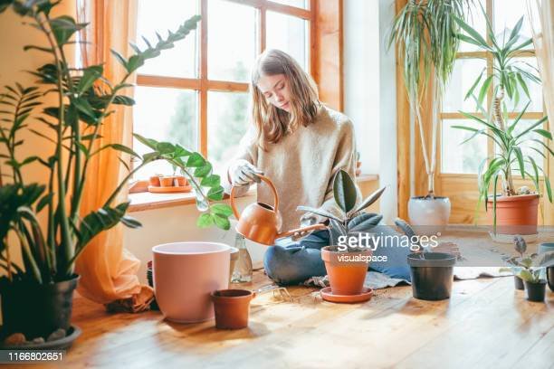 candid portrait of woman watering her plants. - watering stock pictures, royalty-free photos & images