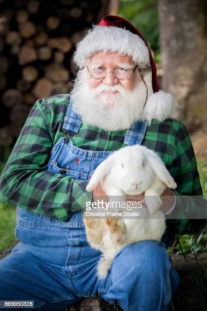 Candid Santa Claus Farmer holding a tender white rabbit.