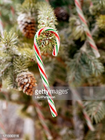 Candy Canes Hanging On A Christmas Tree Stock Photo Getty Images