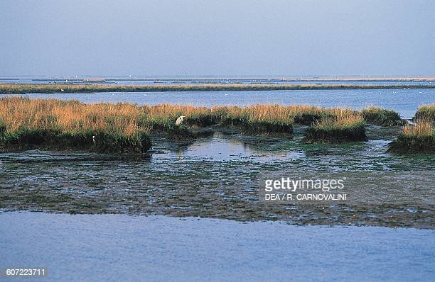 Cane thicket and a heron Venetian Lagoon Veneto Italy