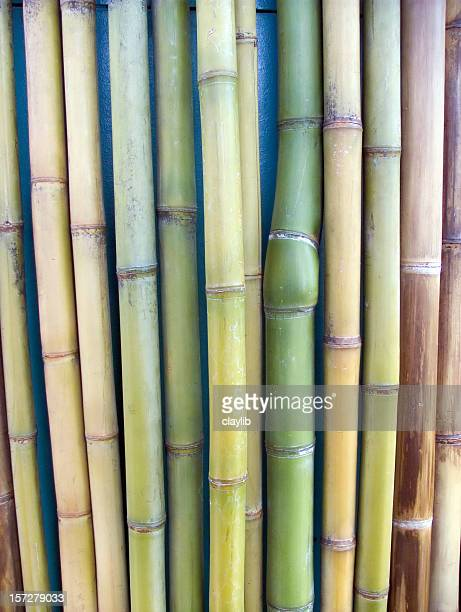 cane wall - sugar cane stock pictures, royalty-free photos & images