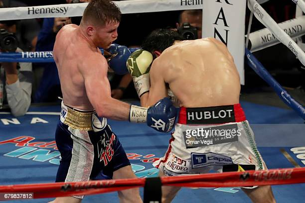 Canelo Alvarez punches Julio Cesar Chavez Jr during their catchweight bout at TMobile Arena on May 6 2017 in Las Vegas Nevada