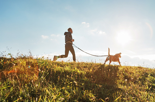 Canicross exercises. Man runs with his beagle dog at sunny morning 1126265493