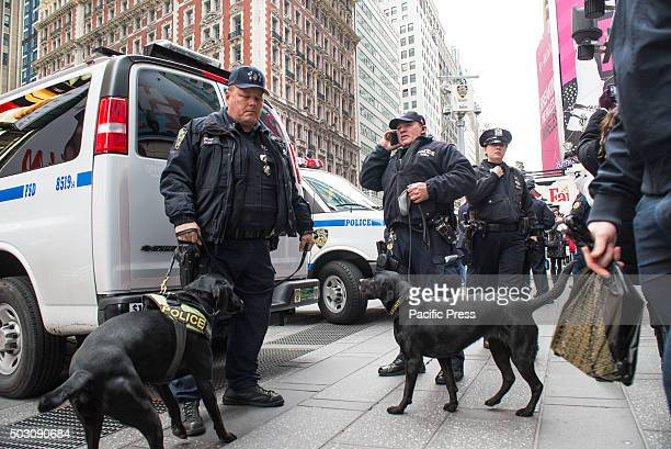 NYPD canine handlers and their dogs prepare to begin their shift patrolling Times Square With a heightened degree of security due to the threat of a...