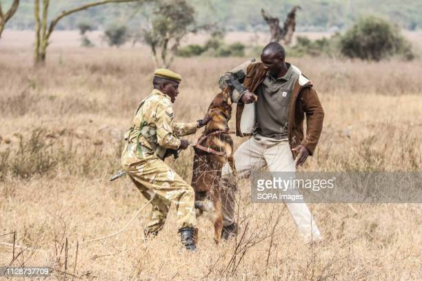 Canine handlers demonstrate how an anti poaching sniffer dog can locate a poacher during this year's world wildlife Day celebrations held at Lake...