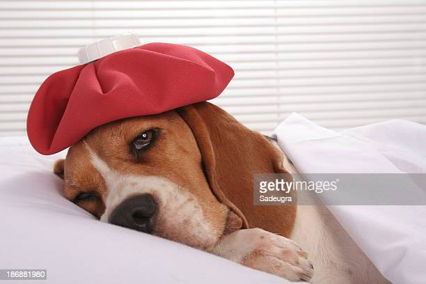 Canine Patient in Hospital Room