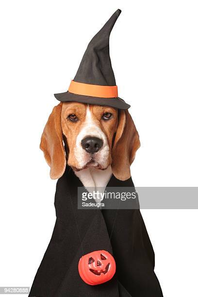 canine sorceress - animal costume stock pictures, royalty-free photos & images