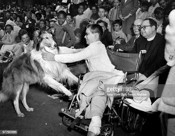Canine star Lassie greets a young patient at Bellevue Hospital