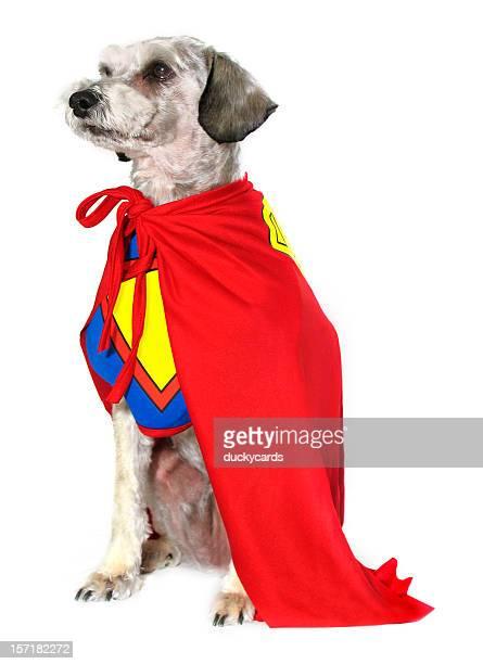 Hundeartige Super-Helden