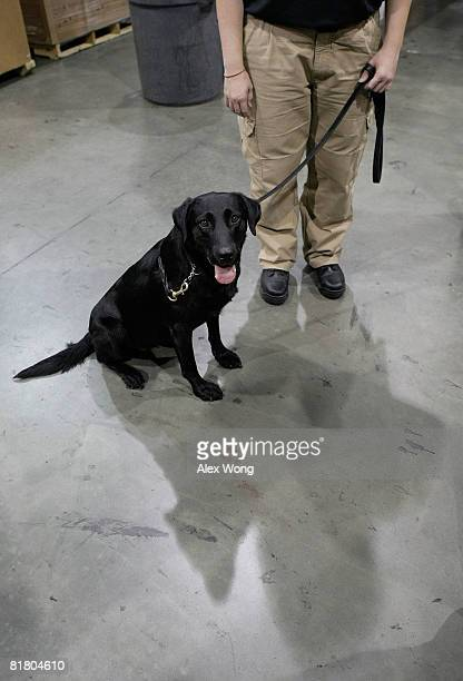 Canine Susie of the newly established Transportation Security Administration canine teams is seen with her handler cargo inspector Elizabeth Koslow...