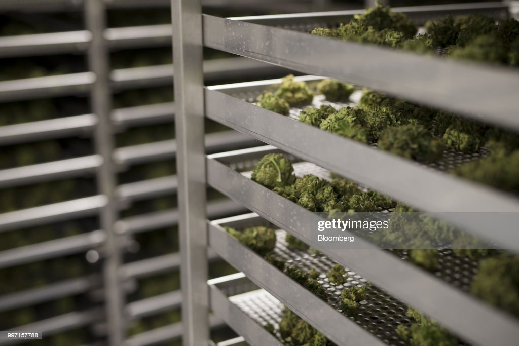 Cannabis buds sit in trays to dry at the CannTrust Holding Inc. Niagara Perpetual Harvest facility in Pelham, Ontario, Canada, on Wednesday, July 11, 2018. Canadian pot stocks have had a wild ride in the past year with the BI Canada Cannabis Competitive Peers Index surging about 250 percent from October to December as the road to legalization became clearer in Canada, before dropping by about 36 percent this year. Photographer: Cole Burston/Bloomberg via Getty Images