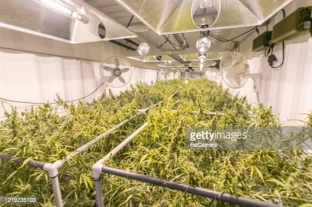 大麻施設 - トリコーム ストックフォトと画像