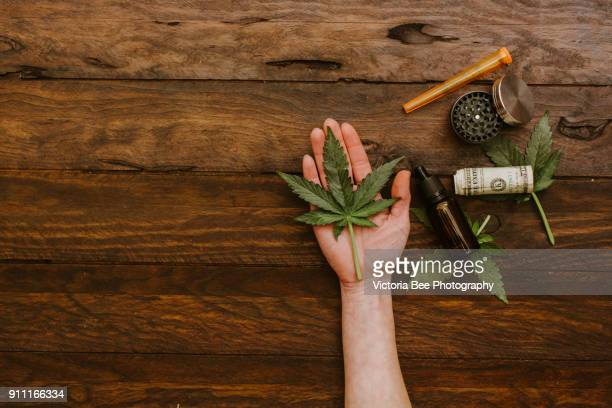 Cannabis green leaf. Green leaves of marijuana in a human hand