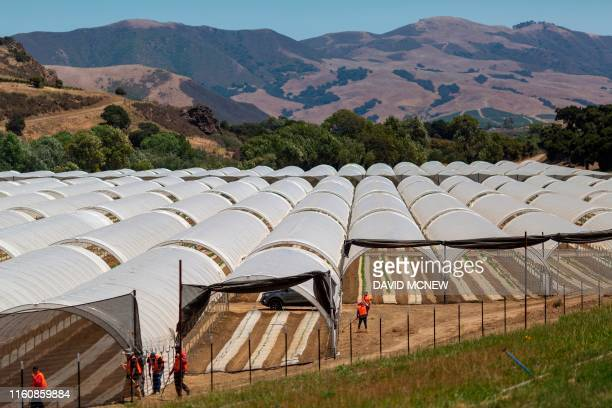 A cannabis growing operation that was constructed in March is seen next to Fiddlestix vineyards in the Santa Ynez Valley northwest of Santa Barbara...