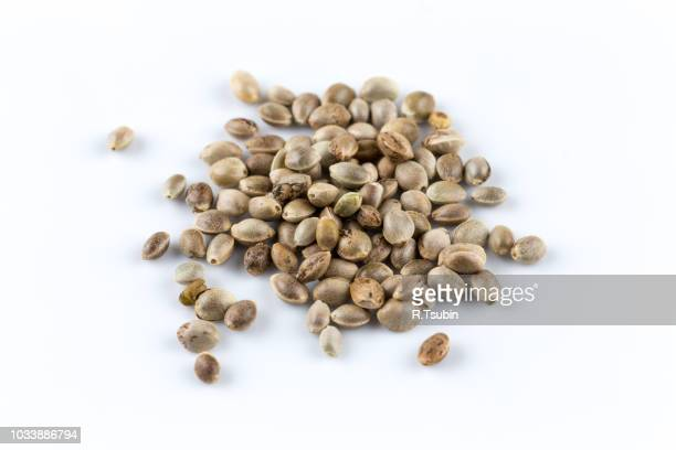 cannabis hemp seeds close up macro shot isolated - hemp seed stock photos and pictures