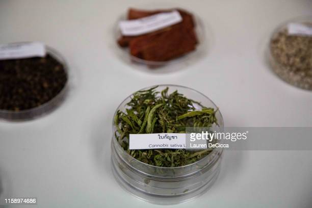 Cannabis in a petri dish surrounded by other Thai medicinal herbs at the Medicinal Cannabis Research Institute at Rangsit University on August 2,...