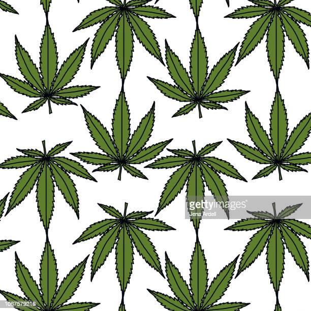 cannabis leaf, cannabis plant, pot leaf, weed, medical marijuana, cannabis oil, marijuana herbal cannabis, cannabis sativa - marijuana leaf stock photos and pictures