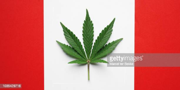 cannabis leaf on canadian flag - cannabis plant stock photos and pictures