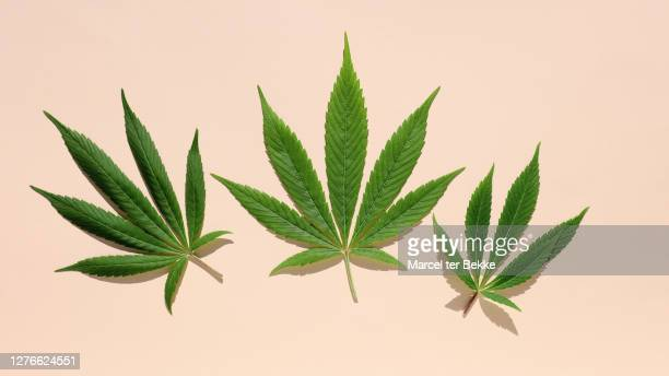cannabis leaf on colored background - marijuana leaf stock pictures, royalty-free photos & images