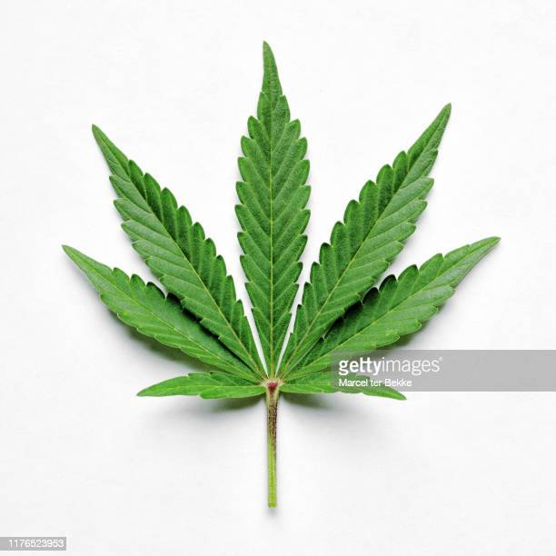 cannabis leaf on white - hemp stock pictures, royalty-free photos & images
