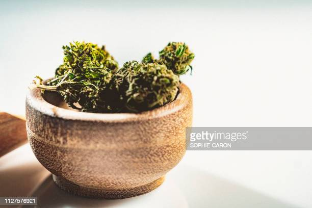 cannabis, marijuana - bud stock pictures, royalty-free photos & images