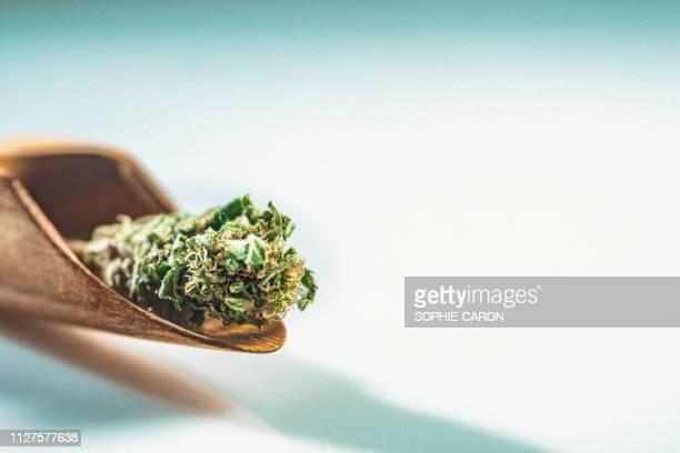 大麻、マリファナ - 大麻草 ストックフォトと画像
