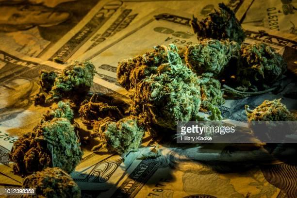 cannabis on top of money - marijuana money stock photos and pictures