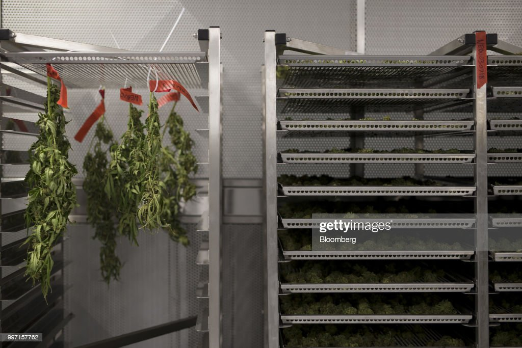 Cannabis plants are hung to dry next to trays of drying buds at the CannTrust Holding Inc. Niagara Perpetual Harvest facility in Pelham, Ontario, Canada, on Wednesday, July 11, 2018. Canadian pot stocks have had a wild ride in the past year with the BI Canada Cannabis Competitive Peers Index surging about 250 percent from October to December as the road to legalization became clearer in Canada, before dropping by about 36 percent this year. Photographer: Cole Burston/Bloomberg via Getty Images