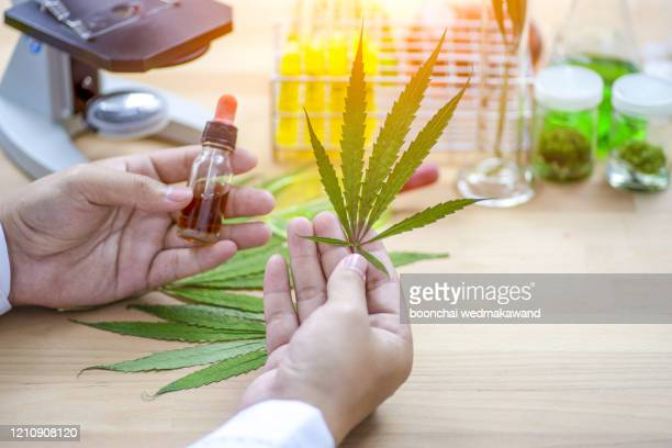 cannabis research , researcher, scientist's hands - medical cannabis stock pictures, royalty-free photos & images