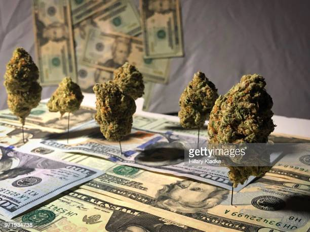 cannabis trees on money - legalization stock pictures, royalty-free photos & images