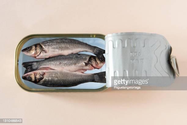 canned fresh fish - miguelangelortega fotografías e imágenes de stock