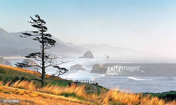 cannon beach - oregon coast stock pictures, royalty-free photos & images