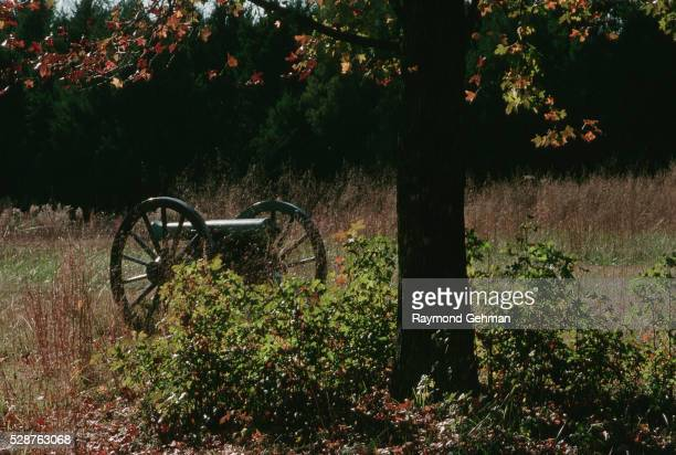 Cannon by an Oak Tree
