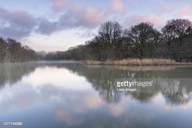 Cannop ponds in the Forest of Dean in Gloucestershire.