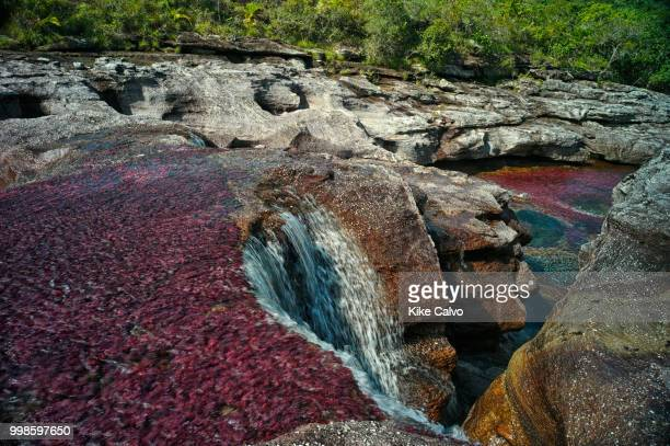 Cano Cristales river, commonly called the River of Five Colors or the Liquid Rainbow. Colorful endemic freshwater plants known as macarenia clavigera...