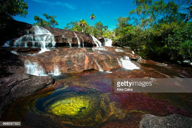 Cano Cristales river is commonly called the River of Five Colors or the Liquid Rainbow. Colorful endemic freshwater plants known as macarenia...