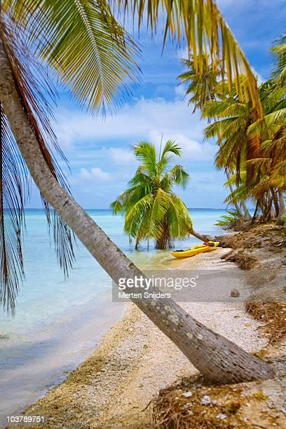 canoe on lagoon shore amongst palms. - merten snijders stockfoto's en -beelden