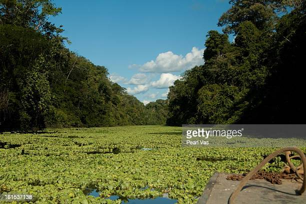 canoe through river lettuce in the amazon - iquitos stock pictures, royalty-free photos & images